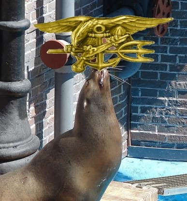 1280px-Seal_ball_balance,_Sea_World_San_Diego,_California,_Apr_2011 (2)